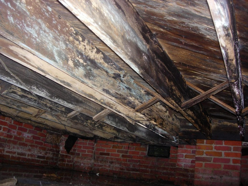 Crawl Space Problem RLC Engineering Leicester NC